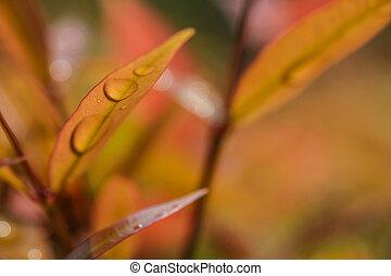 kert, természet, makro, zöld, háttér, esőcsepp