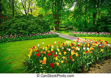 keukenhof, németalföld, kert, fa., tulipán, menstruáció