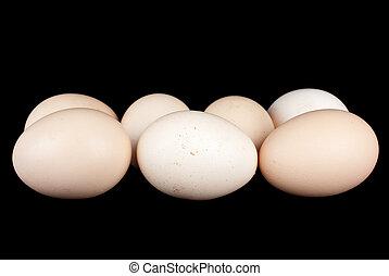 kevés, csirke ikra