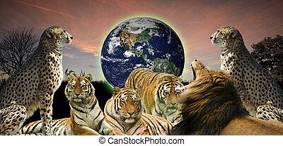 kicsapongó élet, fogalom, emberi, kép, forrás, azt, kreatív, bolygó, belongs, azokat, állat, oltalmaz, földdel feltölt