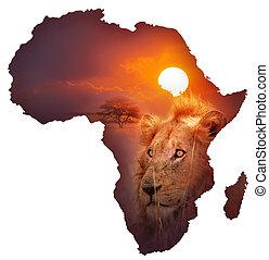 kicsapongó élet, térkép, afrikai
