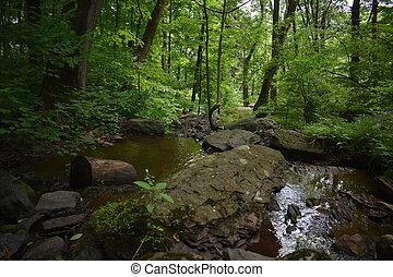 kicsi, buja, test, víz, zöld erdő