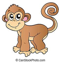 kicsi, csinos, majom