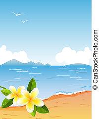 kicsi, tropikus, tengerpart, elágazik, frangiapani