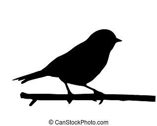 kicsi, vektor, árnykép, madár, elágazik