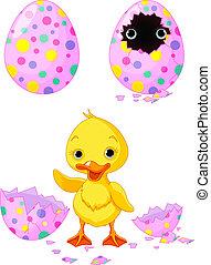 kiskacsa, húsvét