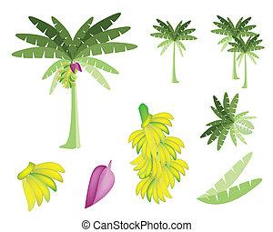 kivirul, állhatatos, fa, banánok, banán