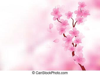 kivirul, elágazik, cseresznye