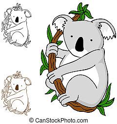koala, elágazik