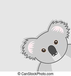 koala, fedő