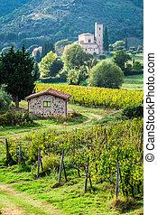 kolostor, ólmozás, szőlőskert, át, ország út