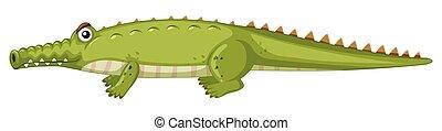 krokodil, white háttér