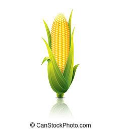 kukoricacső, fehér, vektor, elszigetelt, ábra