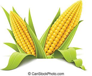 kukoricacső, párosít