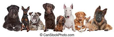 kutyák, csoport