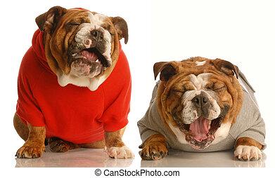kutyák, nevető, együtt, két