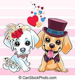 kutyák, vizsla, csinos, labrador, szerelmes pár