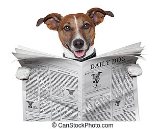 kutya, újság