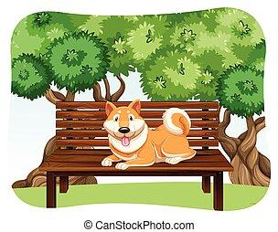 kutya, bírói szék
