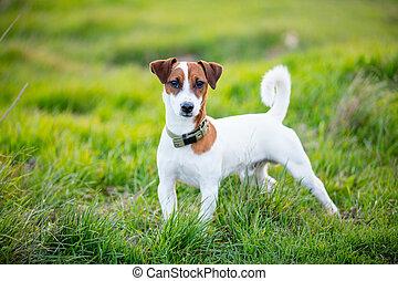 kutya, fénykép