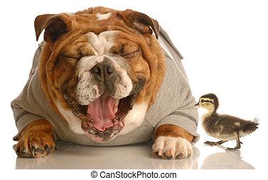 kutya, kacsa, nevető