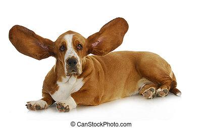kutya, kihallgatás