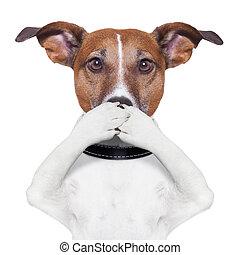 kutya, száj, fedő