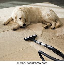 kutya, szőnyeg