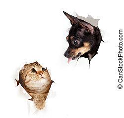 kutya, szakadt, elszigetelt, macska, dolgozat, kilyukaszt, lejtő