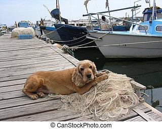 kutya, tenger