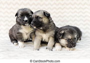kutyus, csoport, újszülött