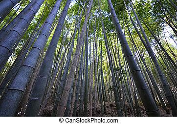 kyoto, arashiyama, liget, bambusz erdő