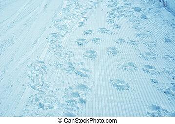 lábnyomok, hó