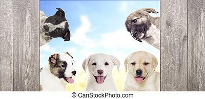 látszó, kutyus, csoport