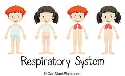légzési, gyerekek, rendszer