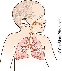 légzési, tervez, gyermek
