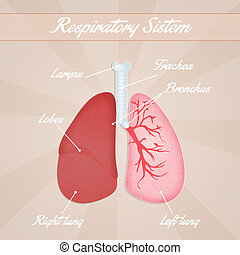 légzőrendszer