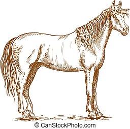 ló, álló, fő fordít