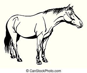 ló, álló, vektor