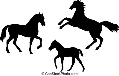 ló, állatok, family., körvonal