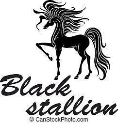 ló, árnykép, tapogat, fekete, mellső láb, -izmú