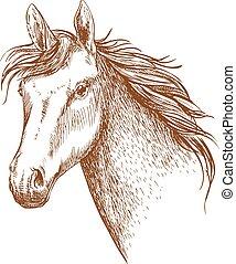 ló, arab, csődör, fej, skicc