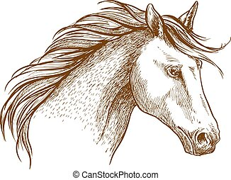 ló, arab, csődör, skicc, ikon