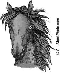 ló, arab, fekete, fej, skicc