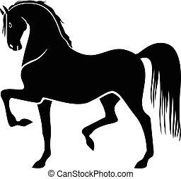 ló, büszke, árnykép