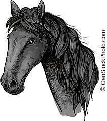 ló, csődör, fej, arab, fekete, skicc