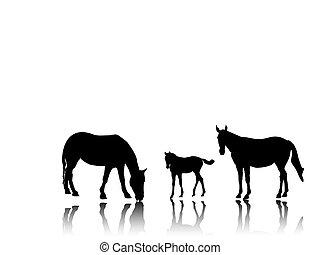 ló család