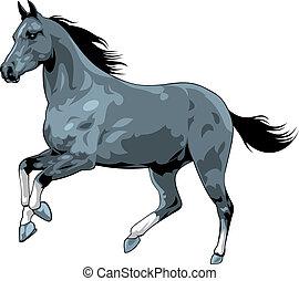 ló, fehér, fekete, elszigetelt, háttér
