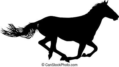 ló, fekete, fehér, amerikai félvad ló, árnykép, háttér