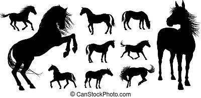 ló, körvonal
